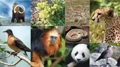 Image results for species diversity