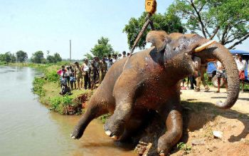 Image results for human wildlife conflict in india
