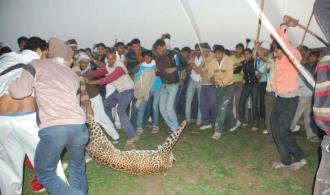 human wildlife conflict retaliation killings के लिए चित्र परिणाम