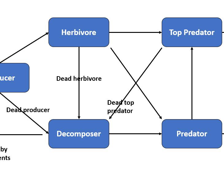 Y-shaped Energy Flow Model