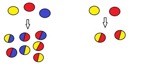 genetic-combinations
