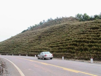 Image result for grasses planted for landslide prevention