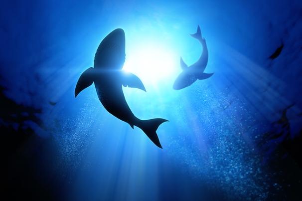 Image result for shark cafe