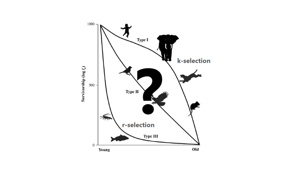Is r/K selection theory still valid?: A look at the