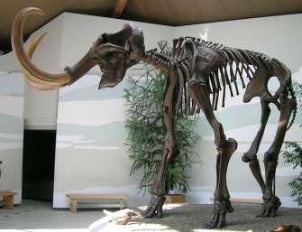Siegsdorfer_Mammut.jpg