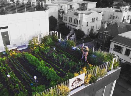 green-roof-1-430.jpg