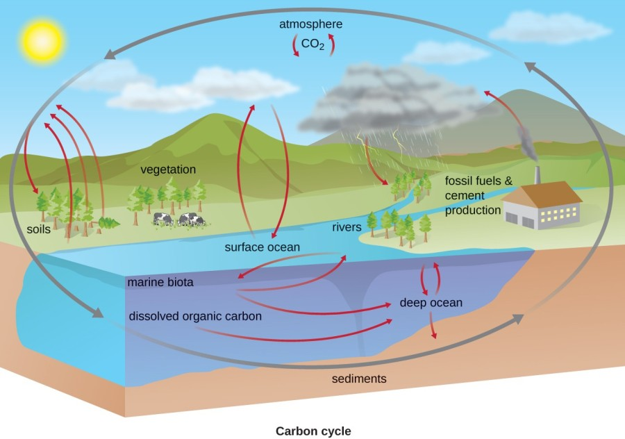 Biogeochemical cycles in ecosystems.