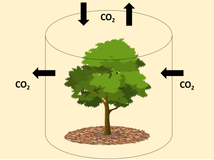 An example of carbon flux through a tree canopy