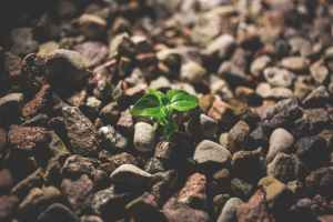 First signs of life on barren land