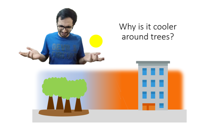 why is it cooler around trees?