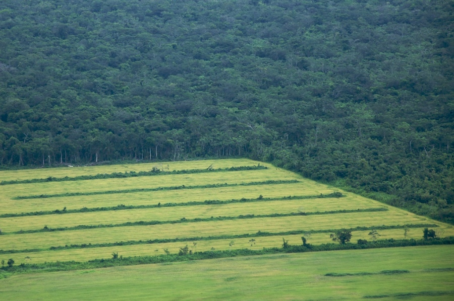 Intensive farming in the Amazon may not end well