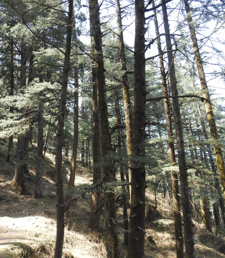 Deodar forest_national forest policy 1952