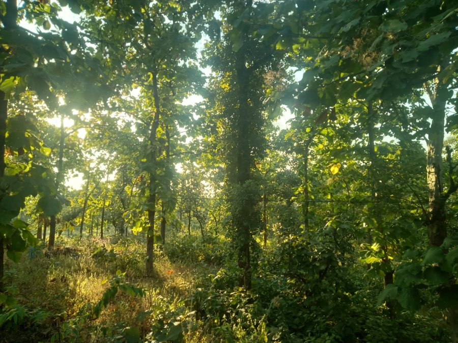 forest in central India